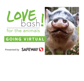 Pasado's Safe Haven Livestream Fundraiser 2020