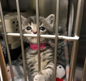 Auburn Valley Humane Society Auction and Week of Giving 2020